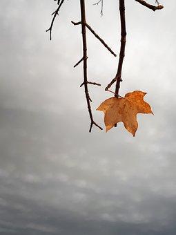 Autumn, Fall, Leaf, Branches, Twigs, Maple Leaf