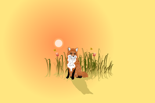 Fox, Wild, Nature, Animal, Wildlife, Mammal, Cute