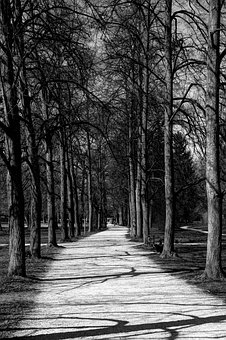 Sidewalk, Sw Picture, Away, Trees, Nature, Park