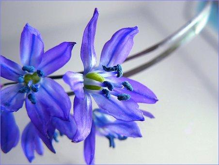 Blossom, Bloom, Macro, Flowers, Plant, Purple, Flower