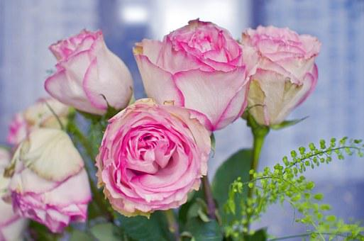 Roses, Bouquet, Flowers, Gift, Joy, Celebration