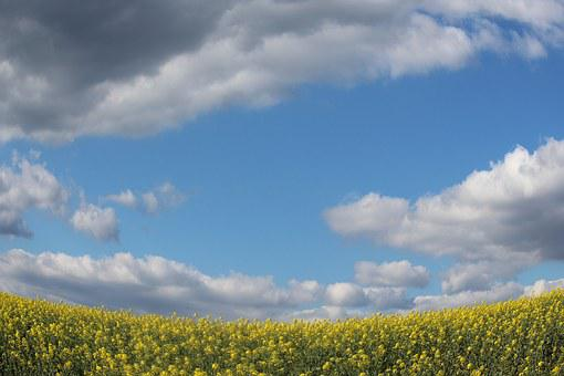 Fields, Mustard, Sky, Blue, Yellow, Clouds