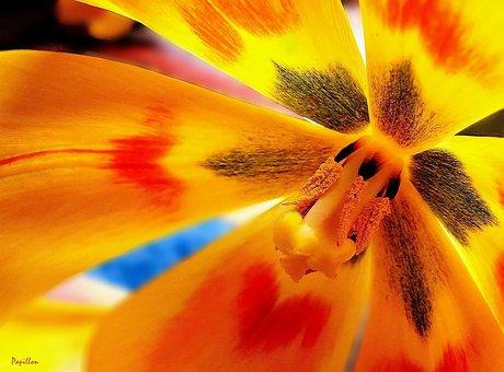 Tulip, Tulips, Spring, Flower, Nature, Sharpness Game