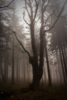 Wood, Frightening, Forest, Nature, Critter, Fog, Mystic