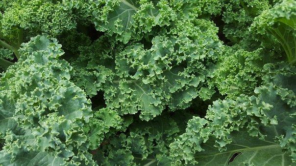 Kale, Lettuce, Salad, Organic, Food, Fresh, Green