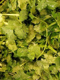 Veg, Cilantro, Plant, Vegetables, Kale, Organic, Fresh