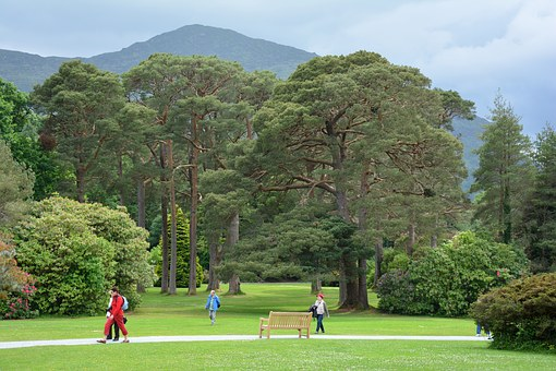 Trees, Old, Old Tree, Park, Away, Passers By, Ireland