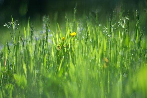 Vernal, Grass, Green, Meadow, Summer, Bokeh