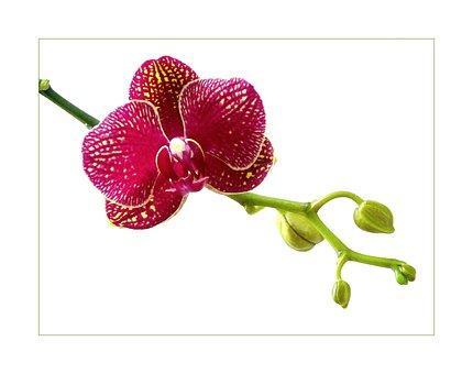 Blossom, Bloom, Macro, Flowers, Plant, Flower, Orchid