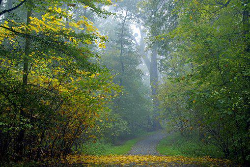 The Fog, Forest, Tree, Magical, Climate, Autumn, Dark