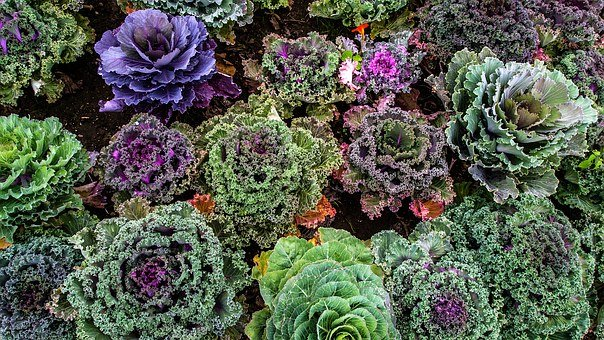 Varieties Of Kale, Vegetable Garden, Vegetables