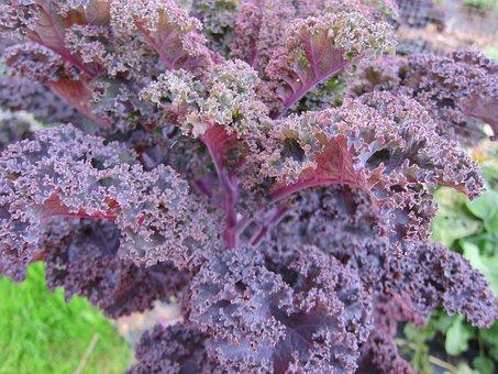 Kale, Food, Vegetable, Natural, Healthy Diet, Salad