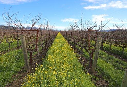 Napa Valley, Wine, Winery, Vineyards, California