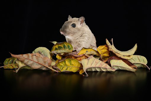 Hamster, Mouse, Leaves, Dried Leaves, Pet, Rodent