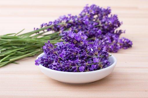 Lavenders, Violet, Flowers, Herbs, Nature, Fragrance