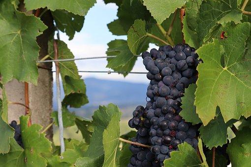 Grapes, Vine, Plant, Grapevine, Leaves, Fruit, Food
