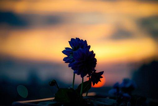 Flower, Plant, Sunset, Silhouette, Petals, Shadow