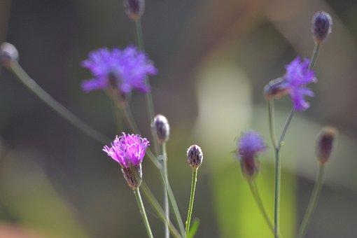 Flower, Nature, Flora, Blossom, Spring, Bloom