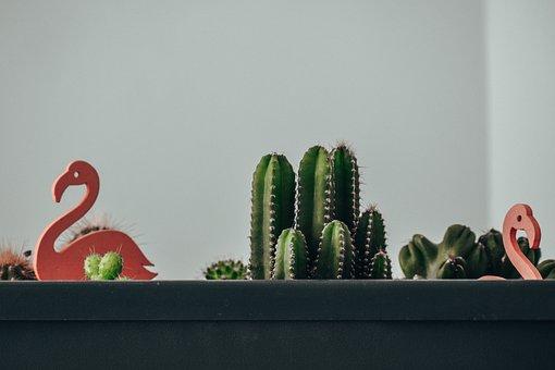 Cactus, Succulent, Cacti, Nature, Plants, Garden