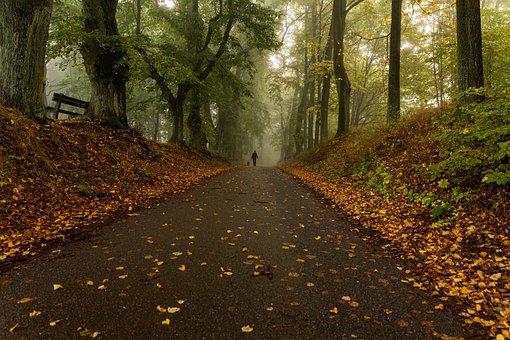 Alley, Castle Alley, Castle, Shrubs, Forest, Nature