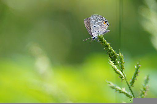 Nature, Butterfly, Green, Grass, Macro, Photography