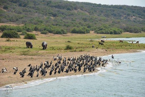 Kazinga Channel, Kazinga, Uganda