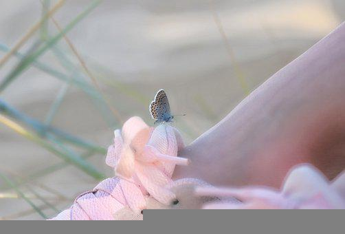Butterfly, Pink, Sneakers, Feet, Legs, Dream, Nature