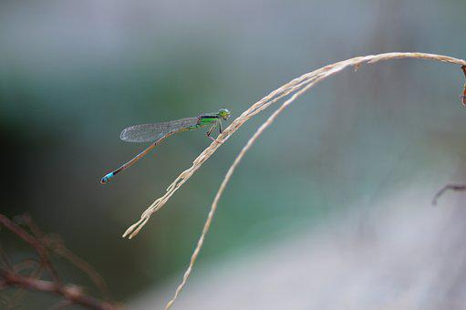 Dragonfly, Nature, Animal, Insect, Grass, Beautiful
