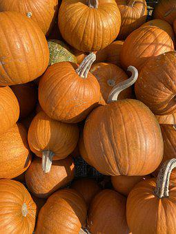 Pumpkins, Gourds, Pumpkin, Gourd, Thanksgiving