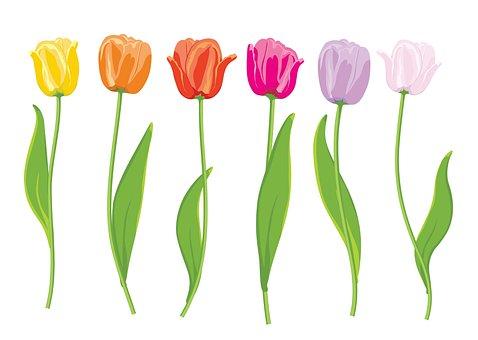 Flowers Rose, Bloom, Roses, Blossom, Love, Flora