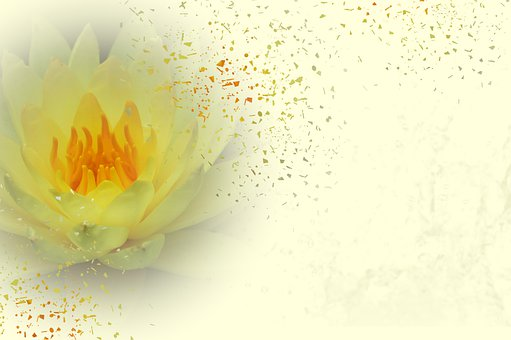 Background, Water Lily, Flower, Spring, Yellow, Pastel