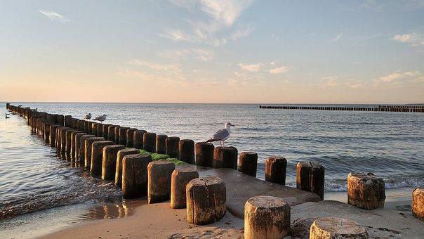 Baltic Sea, Ahrenshoop, Seagull, Fischland, Darß