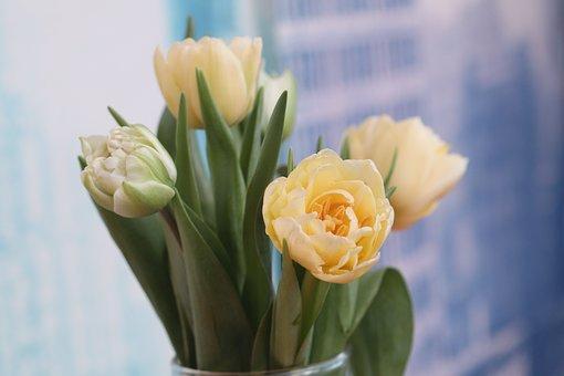 Tulips, Flowers, Bunch, Bunch Of Flowers, Bouquet