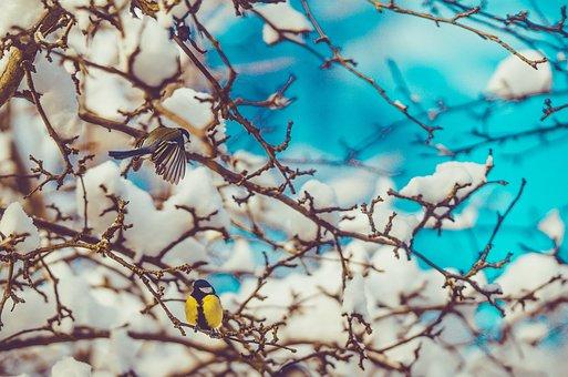 Bird, Spring, Chickadee, Wings, Nature, The Sparrow