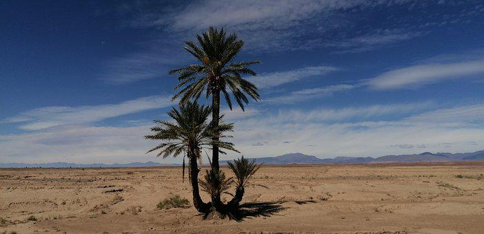 Morocco, Palm Tree, Desert