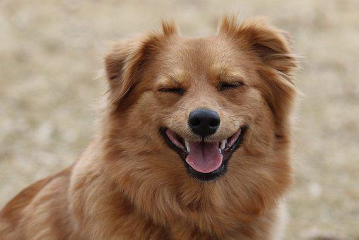 Dog, Puppy, Pet, Animal, Cute, Happy, Adorable, Sweet