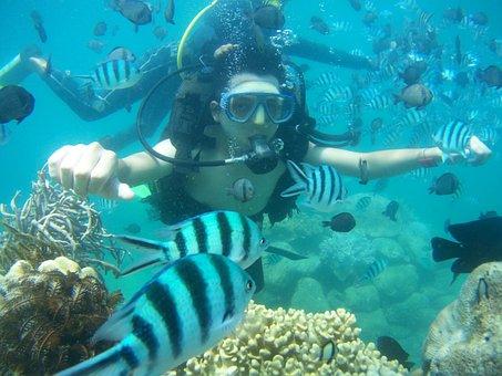 Diving, Fish, Island, Man, Travel, Holiday, Sea, Water
