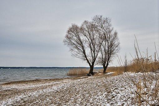 Lake, Bank, Winter, Snow, Beach, Reed, Trees, Wintry
