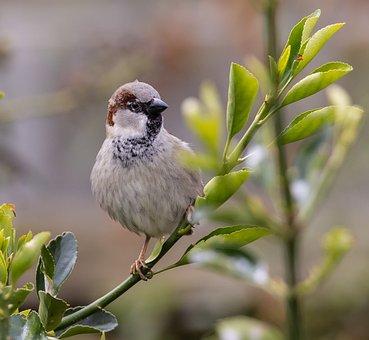 Bird, Sparrow, Branch, Cute, Spring, Songbird, Beak