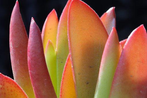 Fleshy In This, A Fleshy Plant, Flower, Succulent