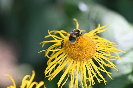 Hummel, Blossom, Bloom, Yellow, Bloom