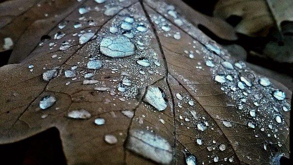 Leaf, Dew, Raindrops, Morning Dew, Drip, Wet, Plant