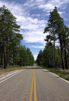 Highway, Road, Trees, Forest, Trip, Arizona, Go, Leave