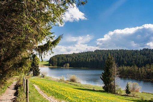 Lake, Path, Road, Trail, Bank, Trees, Forest, Meadow