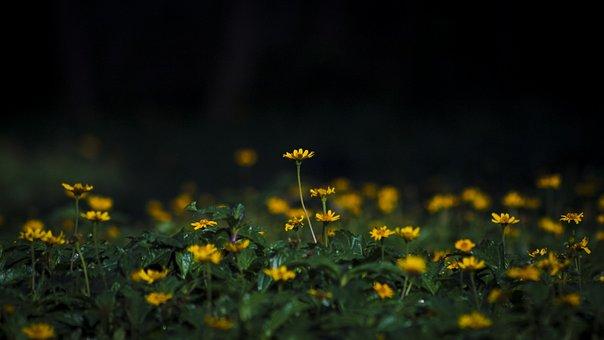 Sunflower, Yellow, Spring, Nature, Bloom, Blossom