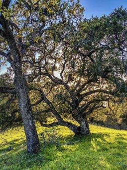 Trees, Leaves, Foliage, Sun, Spring