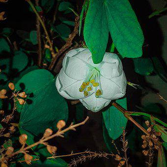 Flowers, Flower Photography, White Flowers, White