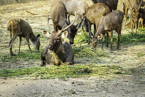 Deer, Animals, Wildlife, Nature, Mammal, Forest, Wild