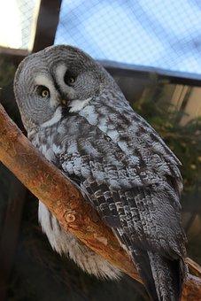 Owl, Bird, Zoo, Animal, Bird Of Prey, Raptor, Predator