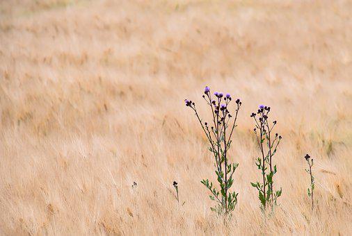 Field, Brown, Nature, Grass, Landscape, Bokeh, Vienna